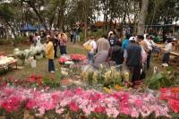 festa da azaleia venda flores